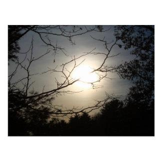 Shine Through Postcard