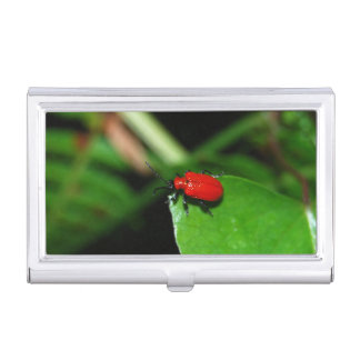 Shining red beetle in the green leaf business card holder