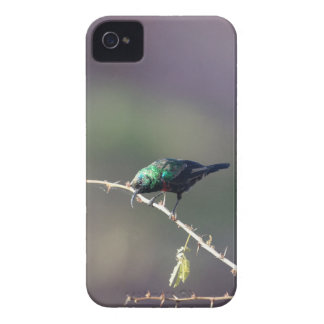 Shining Sunbird (Cinnyris habessinicus) iPhone 4 Case