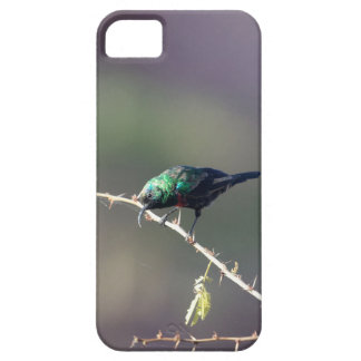 Shining Sunbird (Cinnyris habessinicus) iPhone SE/5/5s Case