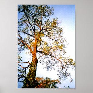 Shining Tree Poster