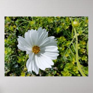 shining white flower poster