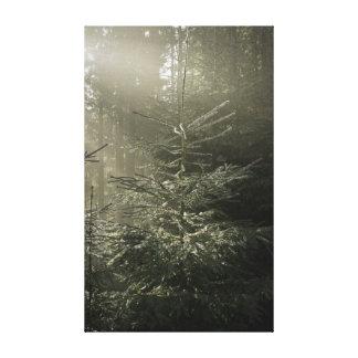 Shining winter fir canvas print