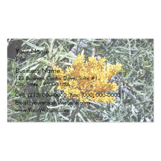 Shining Yellow wattle Double-Sided Standard Business Cards (Pack Of 100)