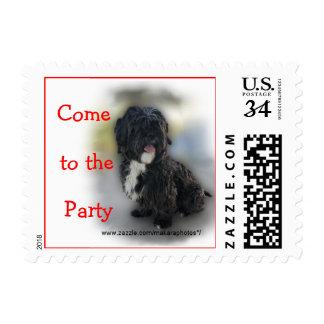 ShinTzu Postage Stamp- customize