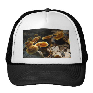 Shiny Cinnamon Polypore Mesh Hat