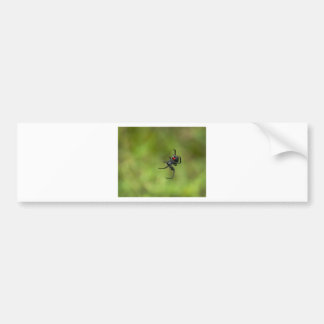 Shiny Red and Black Widow Spider Latrodectus macta Bumper Sticker