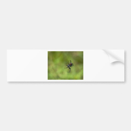 Shiny Red and Black Widow Spider Latrodectus macta Bumper Stickers
