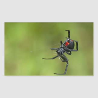 Shiny Red and Black Widow Spider Latrodectus macta Rectangular Sticker