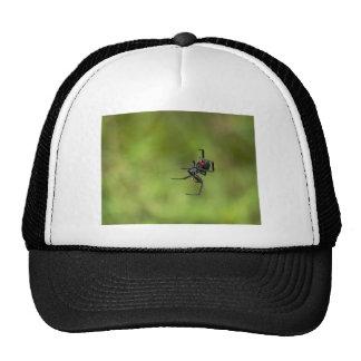 Shiny Red and Black Widow Spider Latrodectus macta Trucker Hat