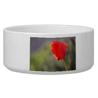 Shiny Red Tulip Bowl