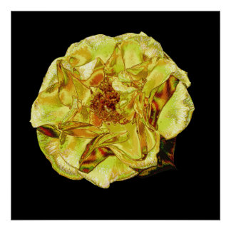 Shiny Yellow Rose poster