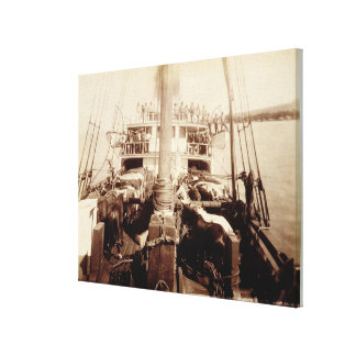 Shipping Cattle on the 'W.G. Hall', Hawaii, 1890s Canvas Print