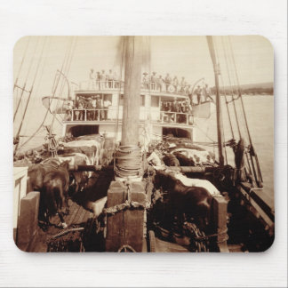 Shipping Cattle on the 'W.G. Hall', Hawaii, 1890s Mouse Pad