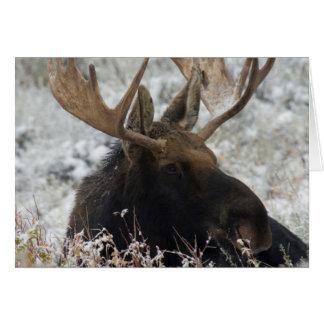 Shiras Bull Moose 2 Card