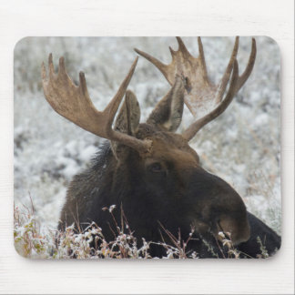 Shiras Bull Moose 2 Mouse Pad