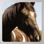 Shire Draft Horse Poster Print