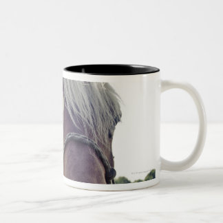 SHIRE HORSE IN SUNLIGHT WITH NOSE UP TO CAMERA Two-Tone COFFEE MUG