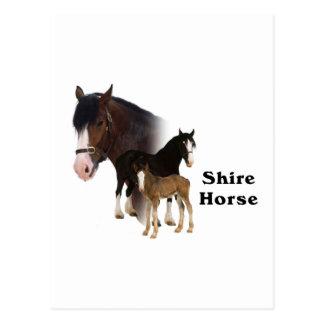 Shire Horse Postcard
