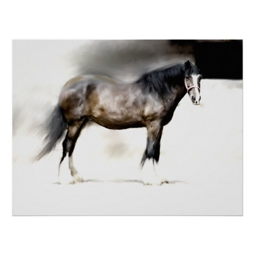 SHIRE HORSE STUDY POSTER