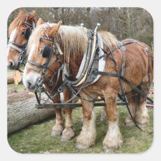 Shire Horses Square Sticker