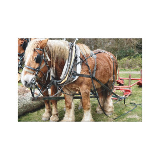 Shire Horses Wrapped Canvas Canvas Print