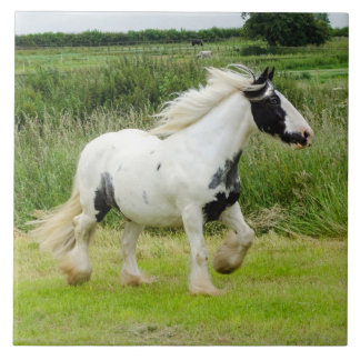 Shire paint horse running Tile