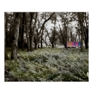 Shirts in a Floodplain Forest Poster