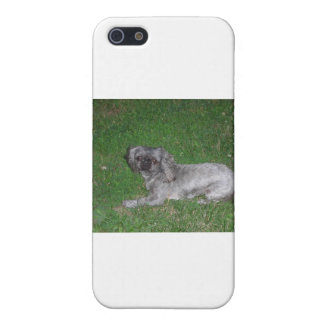 Shitzu, marrón, plata iPhone 5 carcasa
