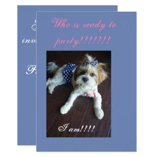 Shitzu pool party invitation, card