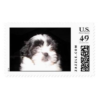 shitzu postage stamp