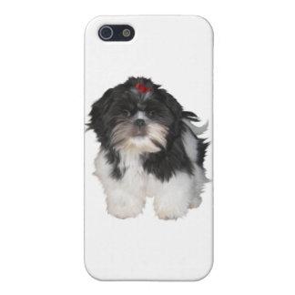 Shitzu Shih Tzu Puppy Dogs Case For iPhone SE/5/5s