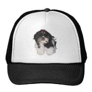 Shitzu Shih Tzu Puppy Dogs Trucker Hat