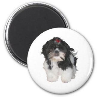 Shitzu Shih Tzu Puppy Dogs Refrigerator Magnet