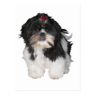 Shitzu Shih Tzu Puppy Dogs Postcard