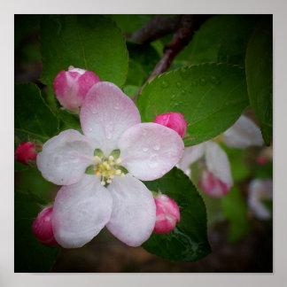Shizuka Apple Blossom Poster