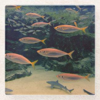 Shoal of Fish Glass Coaster