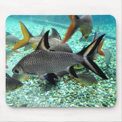 Shoal of fish in springtime, Spain Mouse Pad