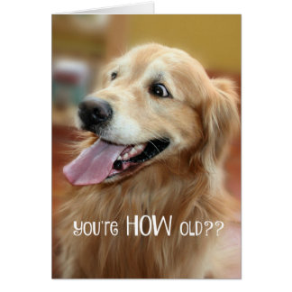 Shocked Golden Retriever Youre How Old Birthday Greeting Card