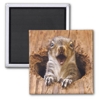 Shocked Squirrel 2 Inch Square Magnet