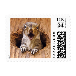 Shocked Squirrel Postage