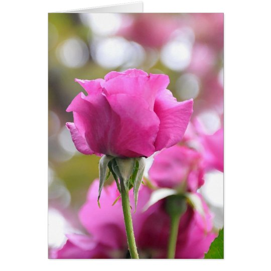 Shocking Pink Beautiful Rose Card
