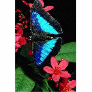 Shoemake azul del rey con las flores rojas del Jat Escultura Fotografica