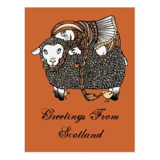 Shonaghs Sheep Postcard
