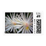 Shooting Star Flowes on Black Back... - Customized Postage Stamp
