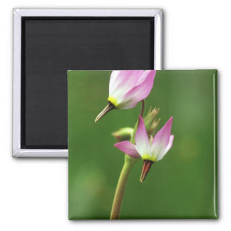 Shooting star wildflower, California, USA 2 Inch Square Magnet