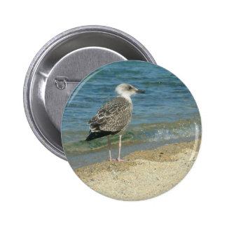 Shore bird pinback button