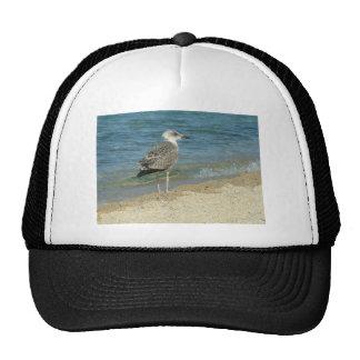 Shore bird trucker hat