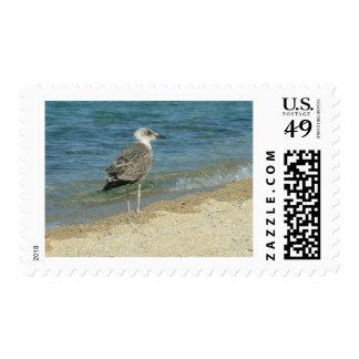 Shore bird postage stamp