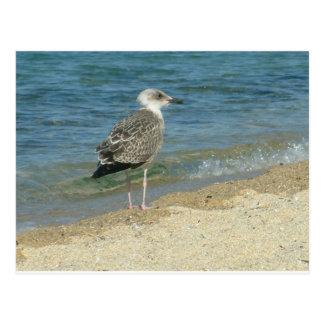 Shore bird postcard